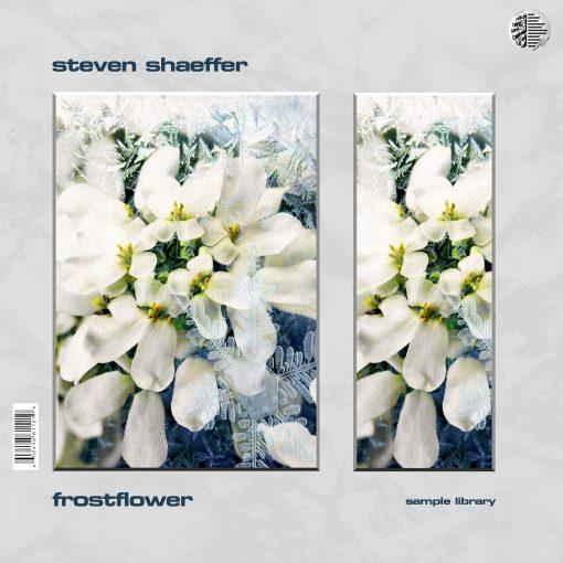 Drumify Steven Shaeffer – Frostflower Sample Library