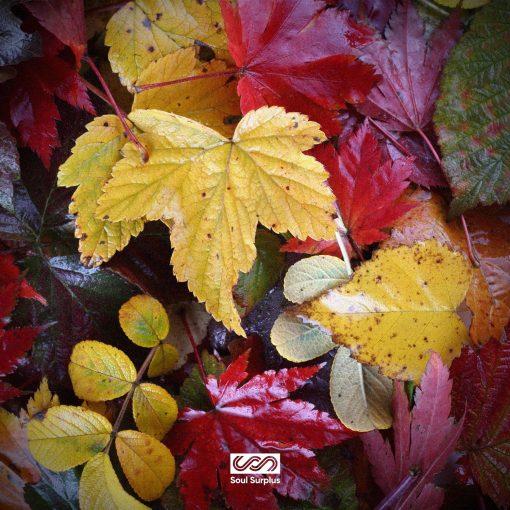 Soul Surplus Autumn Bliss Sample Pack